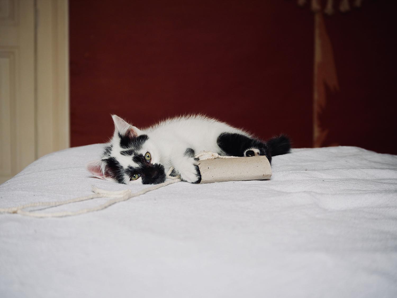 atelierdestilleuls.com famille accueil chatons 01