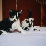 atelierdestilleuls.com famille accueil chatons 06