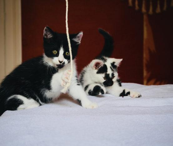 Etre famille d'accueil pour chatons