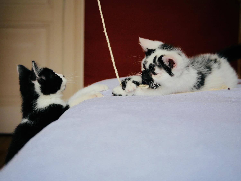 atelierdestilleuls.com famille accueil chatons 07