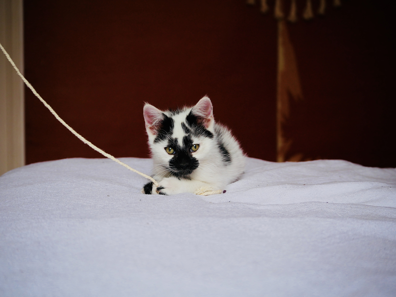 atelierdestilleuls.com famille accueil chatons 09