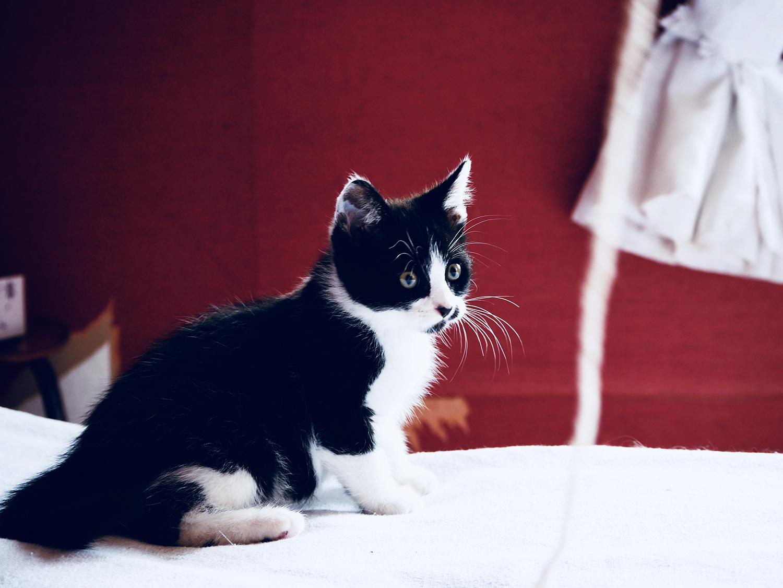 atelierdestilleuls.com famille accueil chatons 14