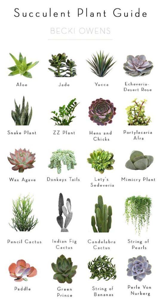 atelierdestilleuls.com carnet entretien plantes 06