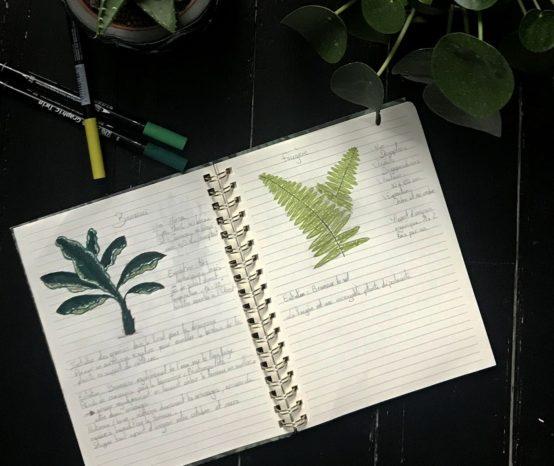 Créer son carnet d'entretien des plantes