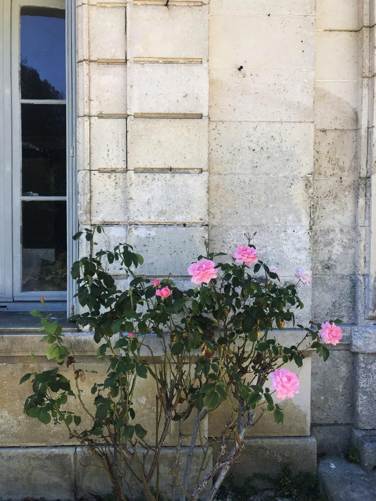 zoom sur un rosier du jardin du domaine de la courade