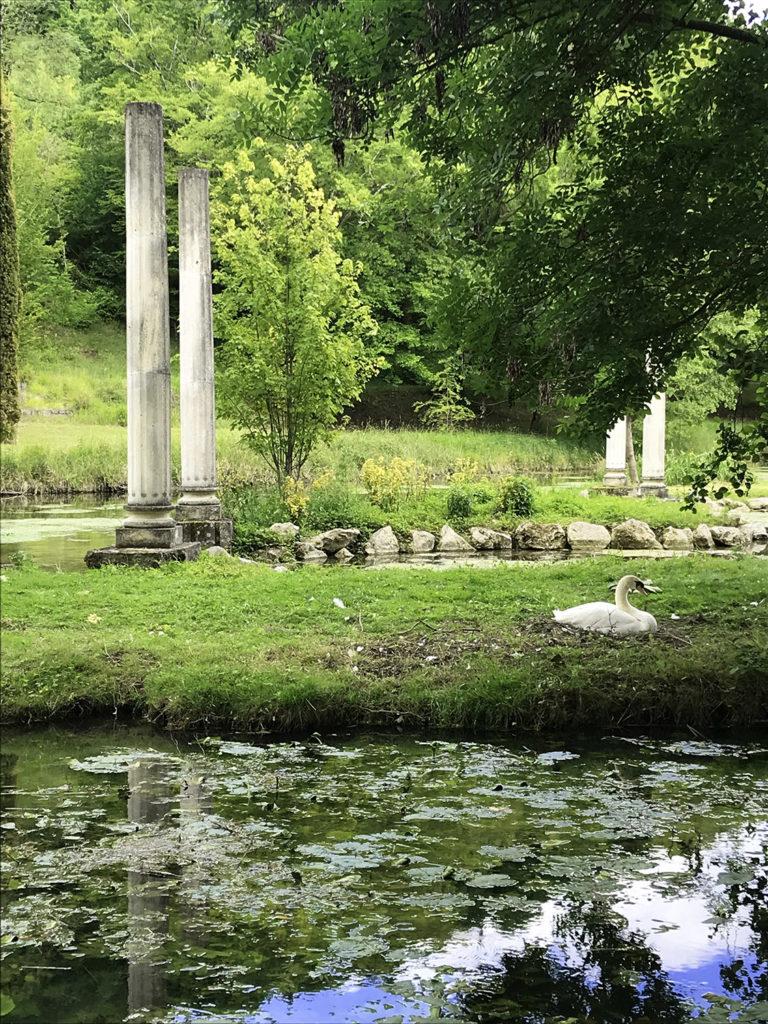 cygne dans les jardins du Logis de Forge en Charente