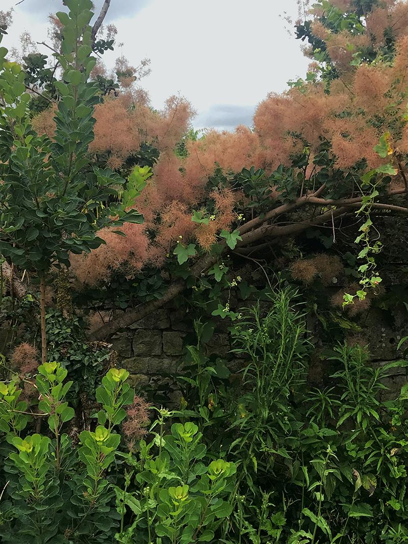 végétation dans les jardins de l'abbaye de Bassac en Charente