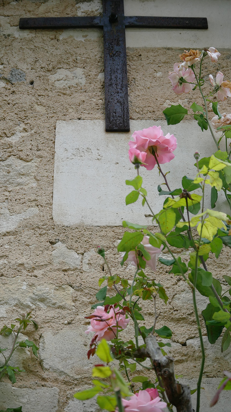 rosier de l'abbaye de Bassac