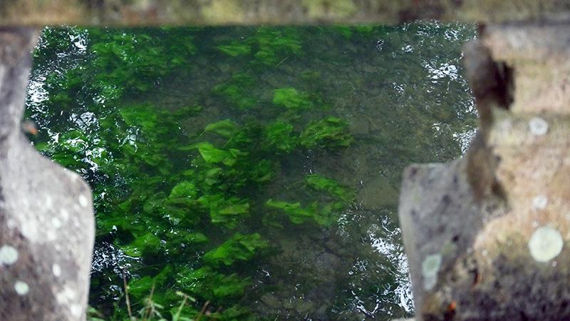 vue du cours d'eau qui passe derrière l'abbaye de Bassac en Charente